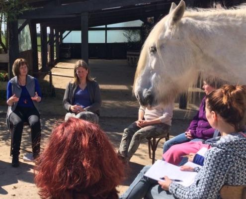 Teamcoaching met paarden bij Landerade Coaching