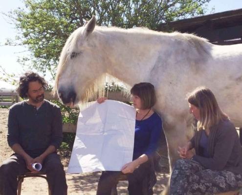 Teamcoaching met behulp van paarden bij Landerade Coaching